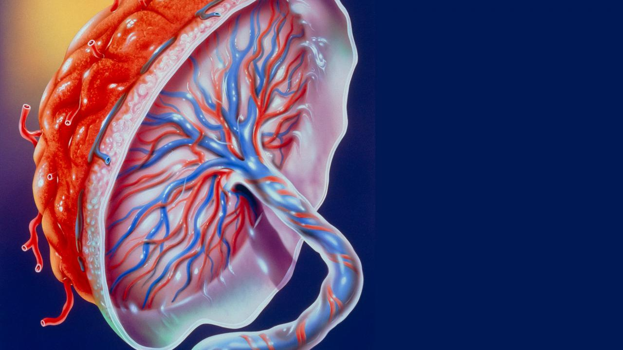 El objetivo de la investigación es conocer más acerca de algunos padecimientos producidos durante el embarazo