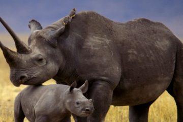 Los mamíferos mencionados no lograron aclimatarse a la zona temporal