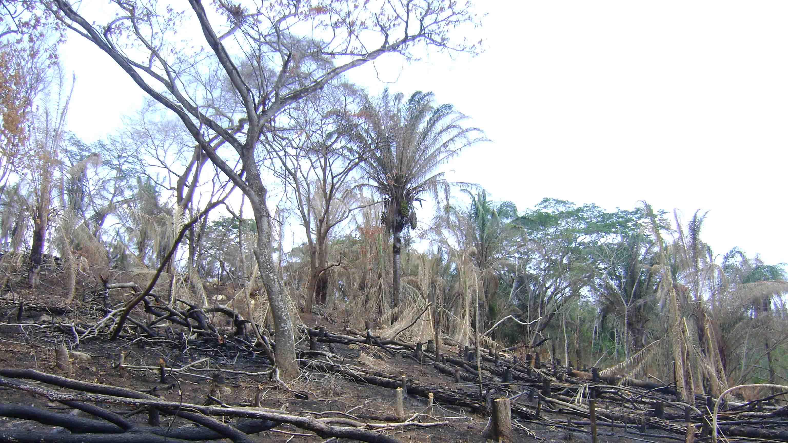 La última vez que se registró el fenómeno provocó condiciones climáticas adversas que generaron estragos en los cultivos, incendios e inundaciones