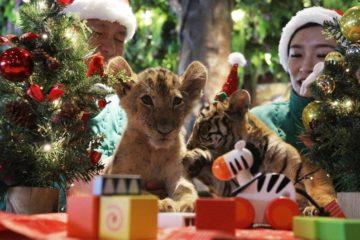 Zoológicos recomiendan no regalar animales en Navidad