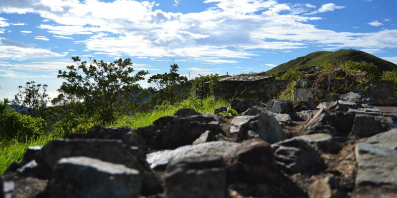 Bosqueterapia.ve cultiva en las montañas de Caracas salud y bienestar