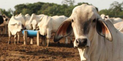Fedenaga indicó que escasez de la gasolina mantiene la corrupción