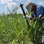 Exoneración de aranceles afecta a los cañicultores venezolanos