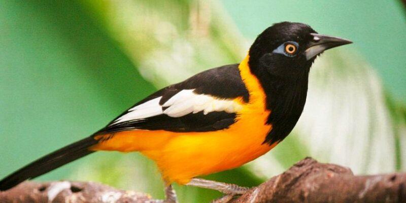 Inparques recibió propuestas para reformar Ley de Protección Ambiental y Animal