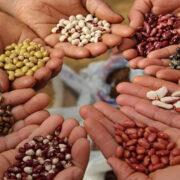FAO donó semillas a una población venezolana