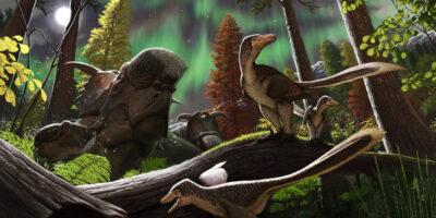Científicos hallaron nuevo espécimen de dinosaurio