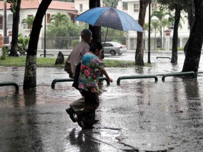 Fuertes lluvias y vientos generaron derrumbes de árboles en Caracas