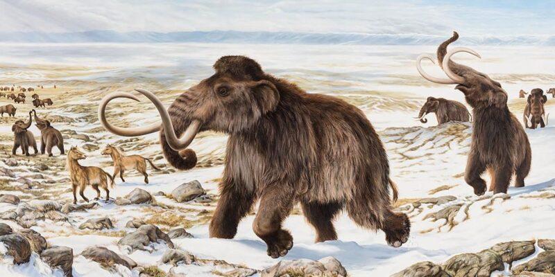 Hallan en Rusia los restos de un mamut bien conservado