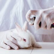 Colombia prohibió las pruebas de cosméticos en animales