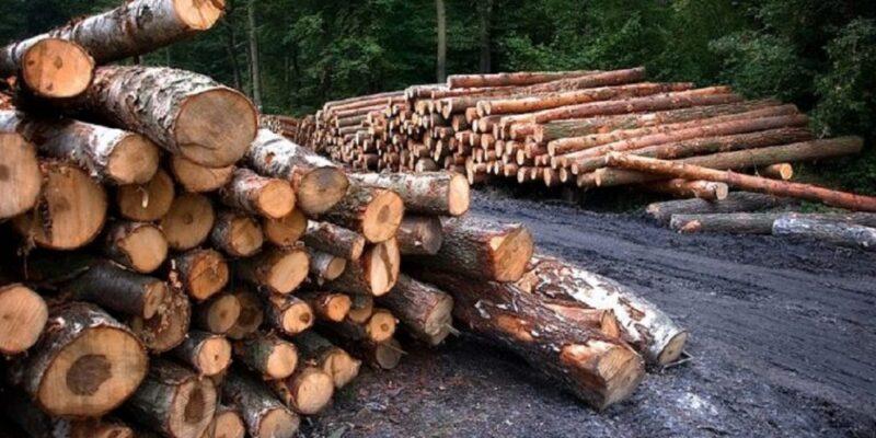 ONG advierte sobre la tala descontrolada en Venezuela
