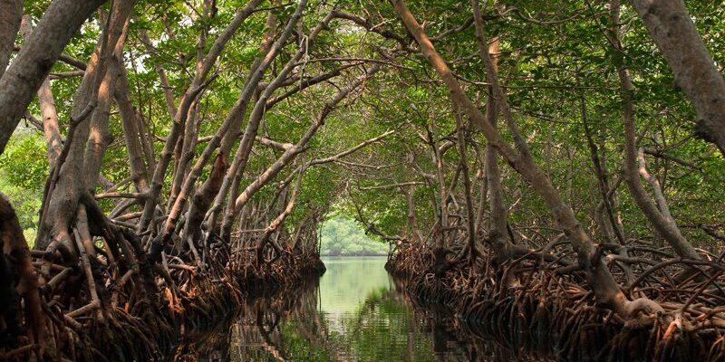 Justicia de Brasil anula planes de Bolsonaro para acabar con la protección de manglares tropicales