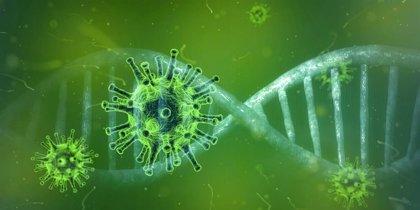 La Revista ACS Central Science, publicó que un grupo de investigadores logró descubrir un componente que podría eliminar el virus