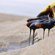Ecologistas exhortan a Pdvsa a detener los derrames petroleros