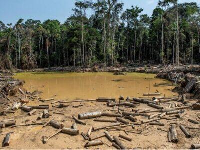 Bolsonaro revelará los países que importan madera amazónica ilegal