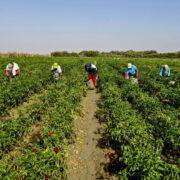 Egildo Luján: Crisis alimentaria y baja producción del campo tienen un plan y soluciones