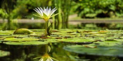 En el agua está la energía de la vida, explica Luis Alberto Cuenca (1)