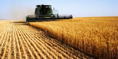 Cosecha de cereales se vio afectada por la falta de financiamiento en el 2020