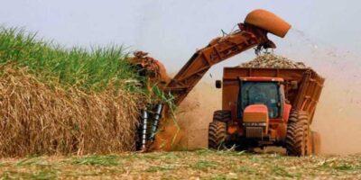 Cañicultores denuncian reducción de la producción debido a la falta de servicios públicos