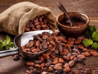 Sector cacaotero venezolano se recupera pese a la pandemia