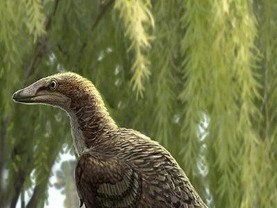 Científicos identificaron a un nuevo dinosaurio carnívoro