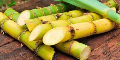Falta de diésel afectará la producción de caña de azúcar