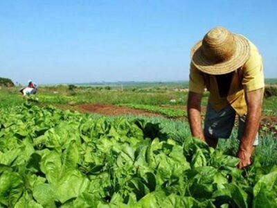Sociedad venezolana de agrónomos solicitó un plan de seguridad alimentaria