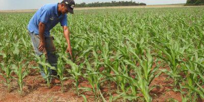 Fedeagro exigió vacunas para los trabajadores del campo