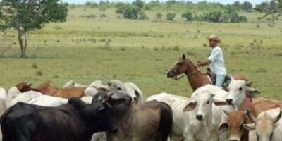 Sector ganadero presenta problemas debido a la falta de combustible