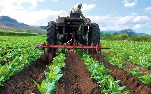 Fedeagro advierte que la producción agrícola cayó un 70 %