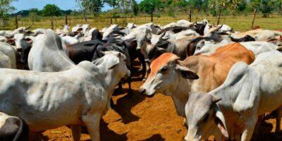 Fedenaga reportó una disminución en el consumo de la carne