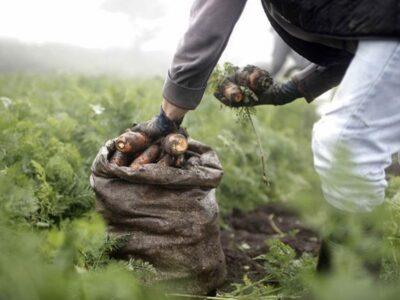 Agrónomos tienen problemas para producir en los campos venezolanos