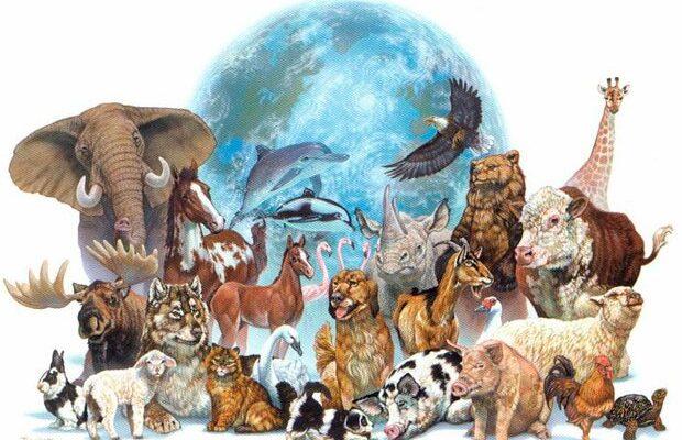 Cambios significativos en la biodiversidad mundial generaría la extinción de vertebrados amenazados
