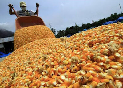 Harina precocida aumentará de precio debido al incremento de los aranceles