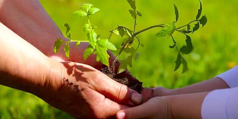 La recuperación poscovid-19 impulsará la agricultura sostenible