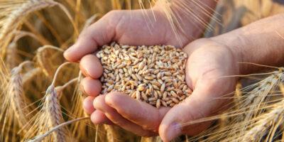 FAO indicó que ciertos alimentos aumentaron de precio durante septiembre en todo el mundo